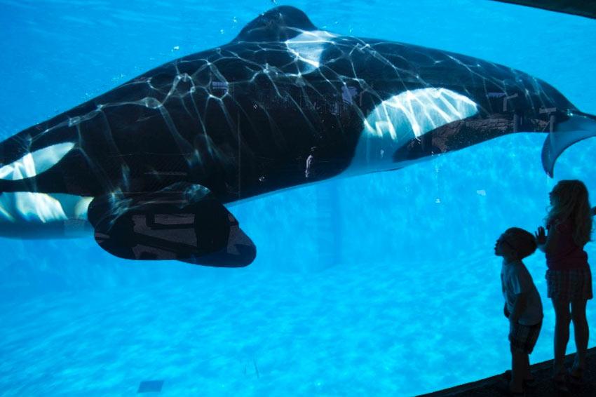 SeaWorld San Diego anuncia novidades para futuro, com menos orcas