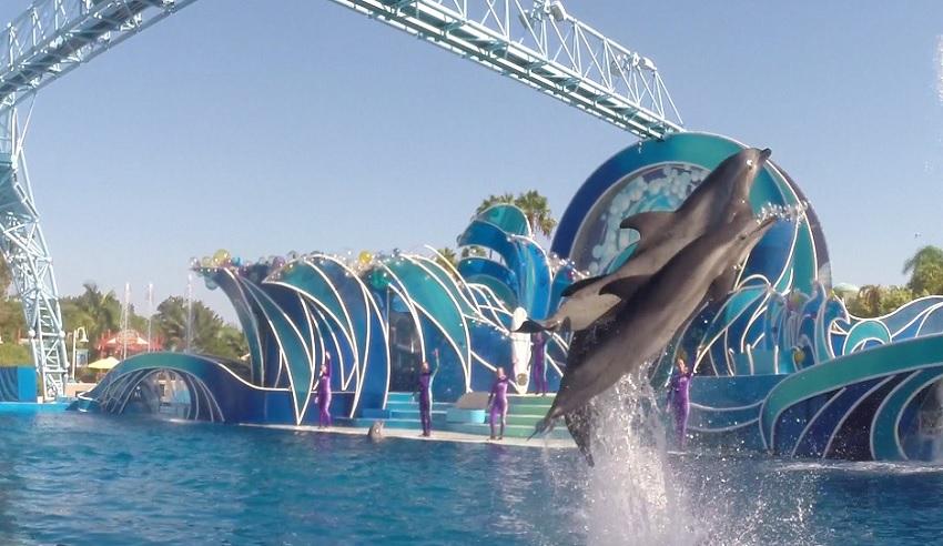 SeaWorld Orlando terá nova apresentação Dolphin Days, com menor participação dos golfinhos